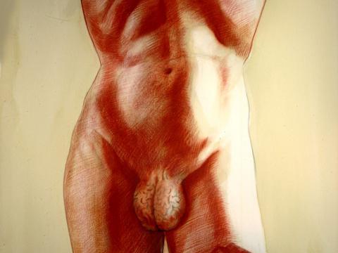 Racional (estudio), 2004 / Sanguínea, conte, acuarela sobre papel / 152 x 102 cm